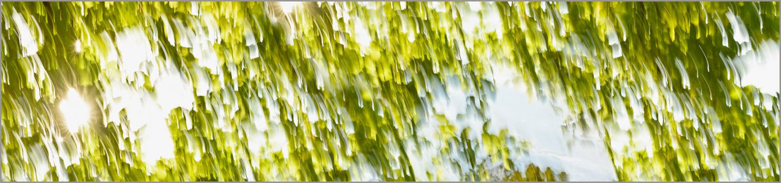 Green_4324_XL
