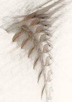 Leaves_17487_L | Rica Belna Artwork