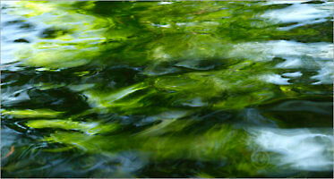 Water_F0906_XL | Rica Belna Artwork