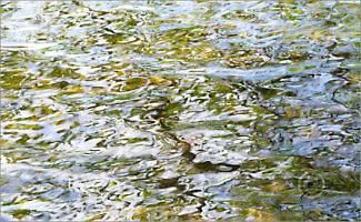 Water_F3391_XL | Rica Belna Artwork