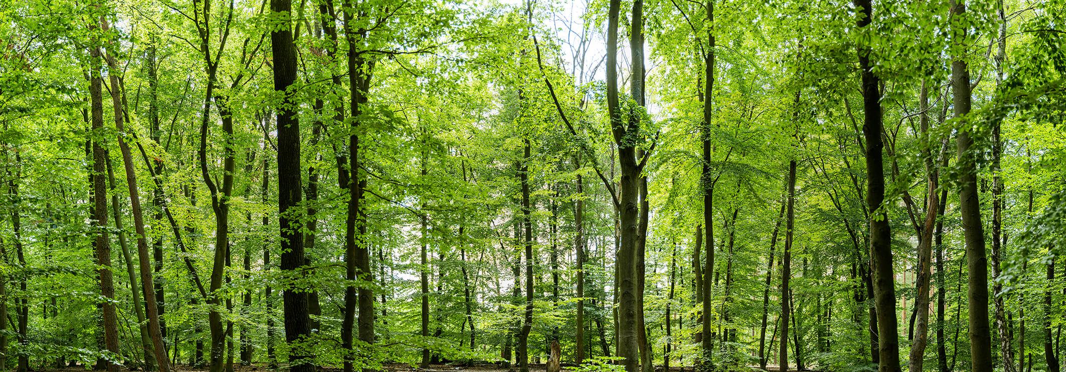 Wood_DSF2080_Pano_3XL 1