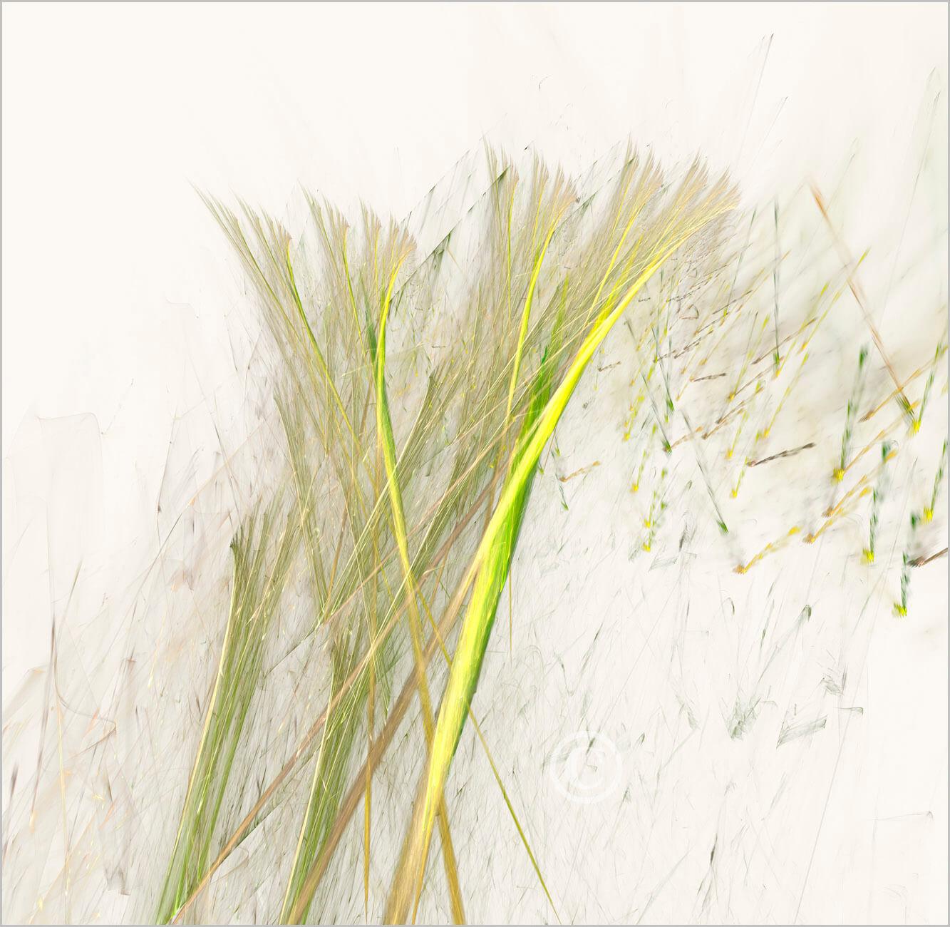 simplicity_21329_L 1